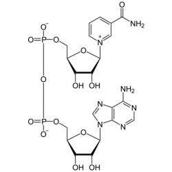Nicotinamide Adenine Dinucleotide (NAD) 99%