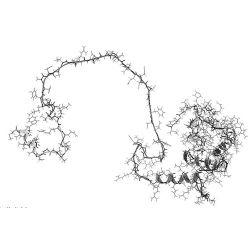 PS1 Peptide (aka PSEN1, Presenilin 1, Neosh 101)